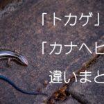 カナヘビとトカゲの違い その簡単な見分け方を画像で紹介します
