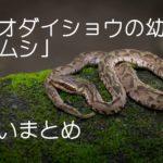 アオダイショウの幼蛇とマムシの違いを画像で比較してみた