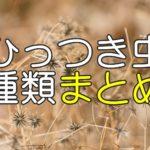 ひっつき虫の種類まとめ【身近な草・植物の名前図鑑】