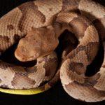 蛇の種類と名前 日本産ヘビ全種類まとめました