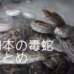 日本産毒蛇の種類まとめ ヤマカガシ・マムシ・ハブだけじゃないよ